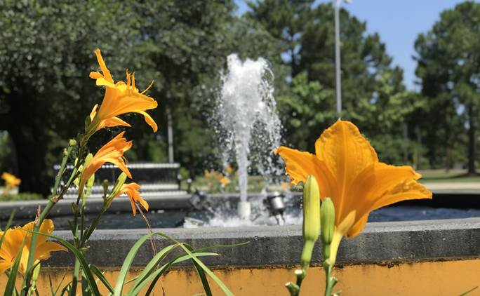 GSU Campus Flowers and Fountain