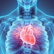 Introduction to Cardiovascular  Disease and Exercise